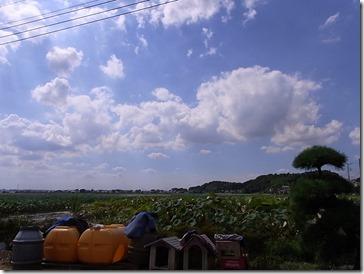 農園から見た風景